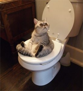 This is a cat on a toilet